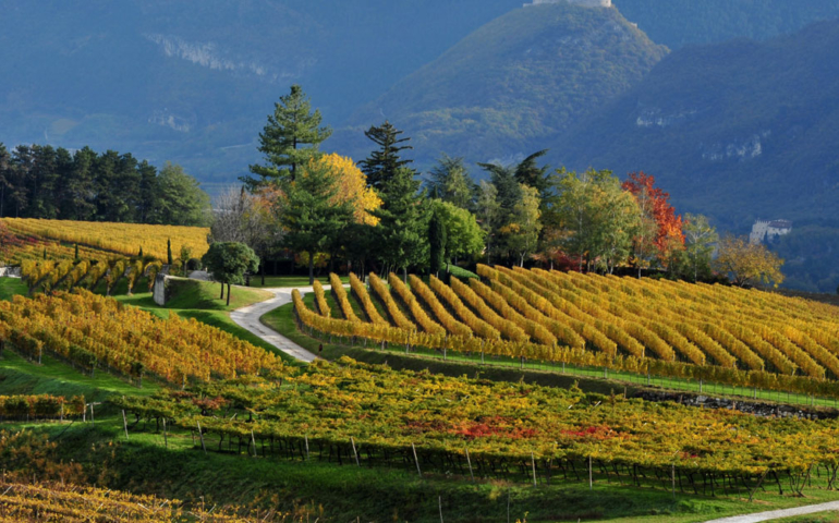 A Beginner's Guide to Trentino, Northern Italy's Wine Mecca